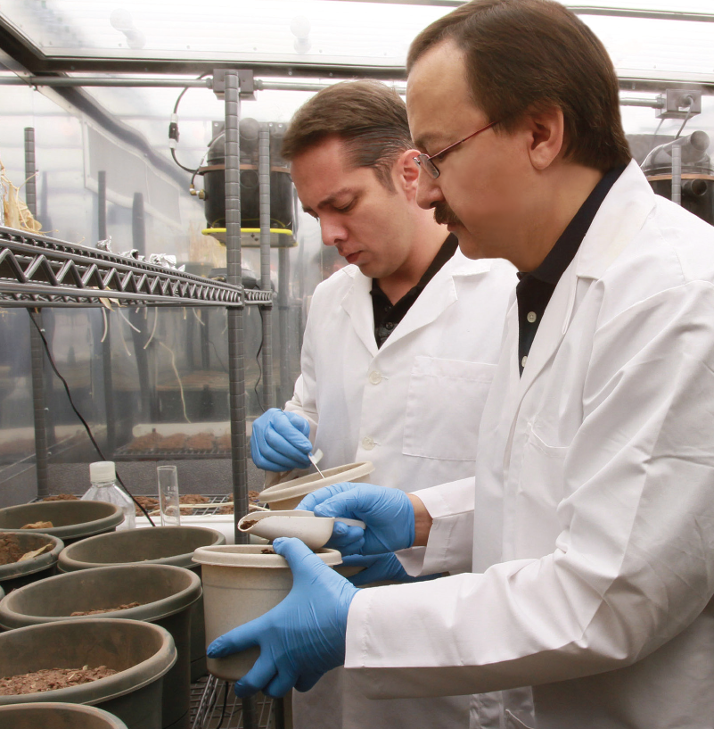 nanomaterials found to impact food crops utep news archive