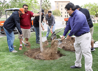 Current and past members of UTEP's Omega Delta Phi fraternity recently celebrated the chapter's 25th anniversary with several activities including the planting of a Chinese pistache shade tree in front of Benedict Hall. Photo by Laura Trejo / UTEP News Service