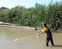 Biologists Examine How Pollutants Affect Aquatic Life