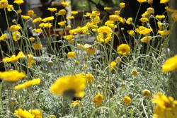 FloraFEST 2015 — Region's Largest Native Plant Sale – Scheduled for April 25 and 26