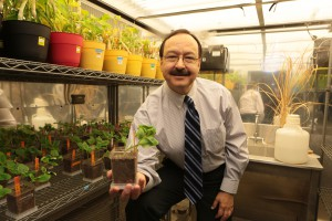 Jorge Gardea-Torresdey, Ph.D., is shown in the growth chamber lab. Photo by J.R. Hernandez, UTEP Communications